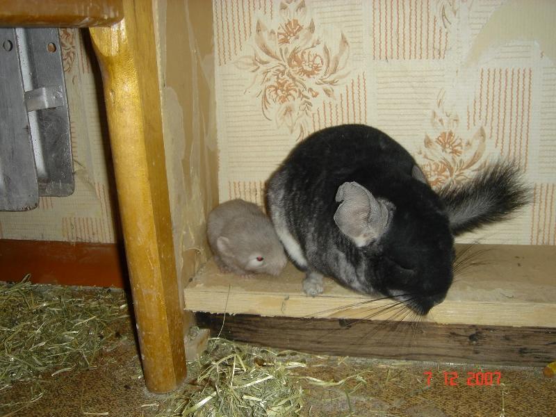 chin-busya-with-baby
