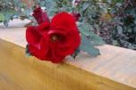 mostovaya-end-roses4