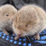 mostovaya-mouse