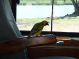 tanzania_ngorongoro_dsc08137