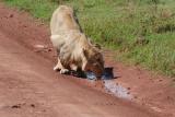 tanzania_ngorongoro_dsc_0125