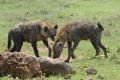 tanzania_ngorongoro_dsc_0247