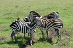tanzania_ngorongoro_dsc_0359