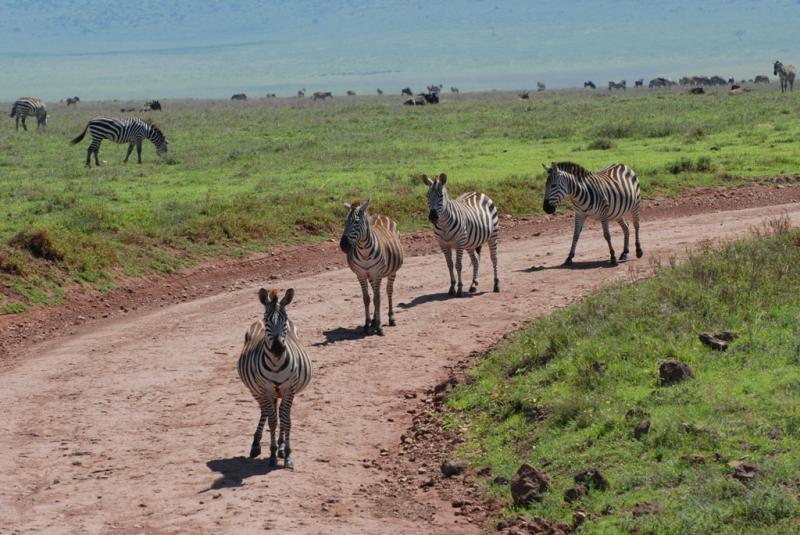 tanzania_ngorongoro_dsc_0141