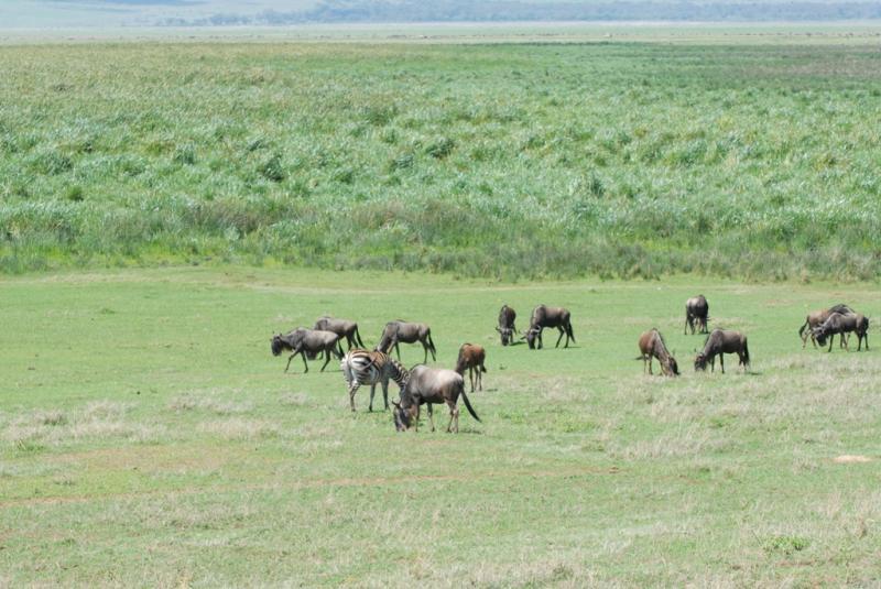 tanzania_ngorongoro_dsc_0151