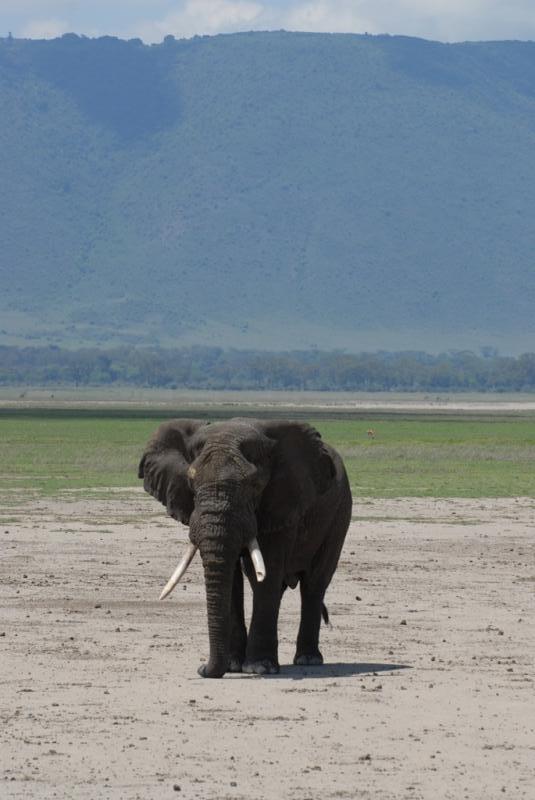 tanzania_ngorongoro_dsc_0214