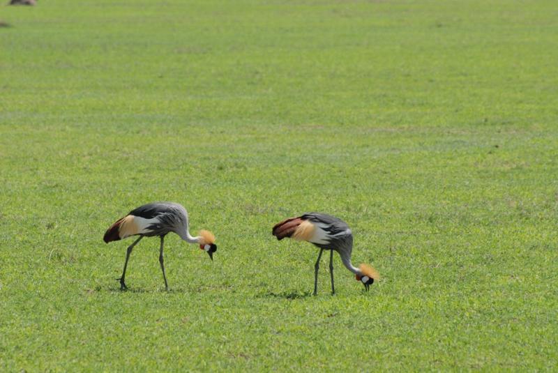 tanzania_ngorongoro_dsc_0226