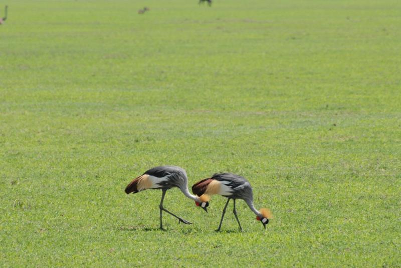 tanzania_ngorongoro_dsc_0228