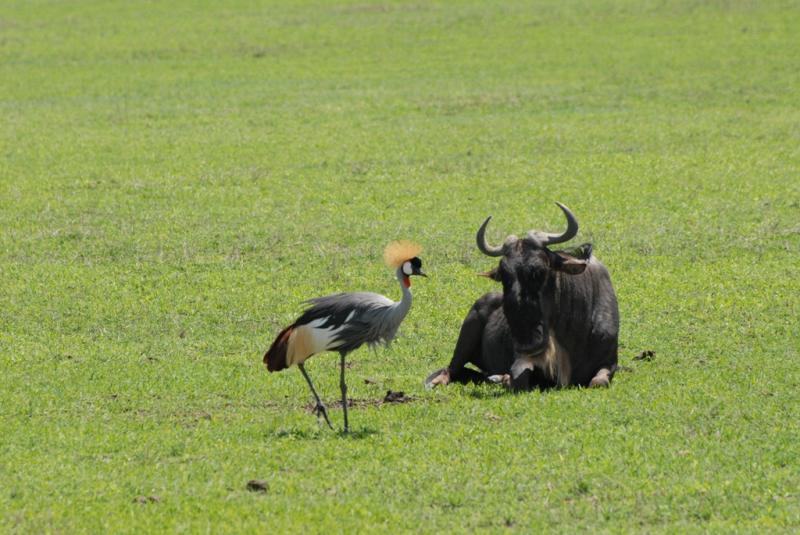 tanzania_ngorongoro_dsc_0235