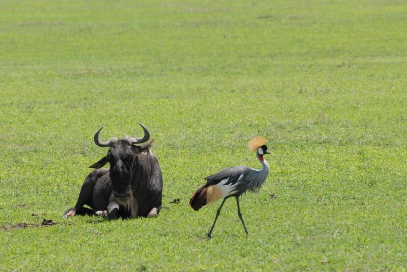 tanzania_ngorongoro_dsc_0242