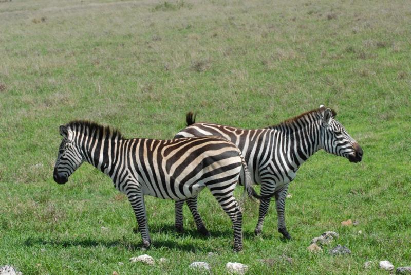 tanzania_ngorongoro_dsc_0349