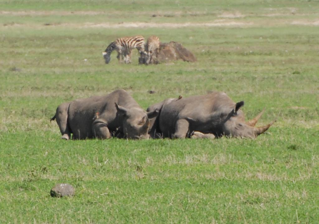 tanzania_ngorongoro_dsc_0373