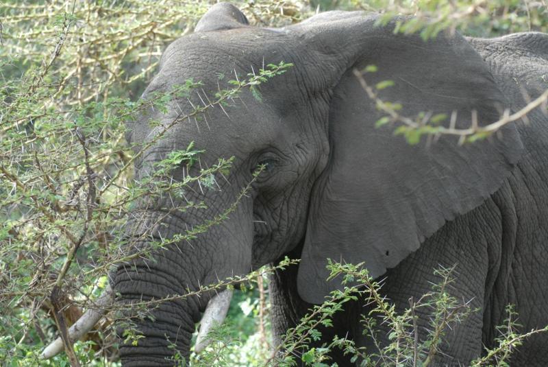 tanzania_ngorongoro_dsc_0396