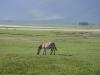 tanzania_ngorongoro_dsc08110