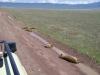 tanzania_ngorongoro_dsc08152