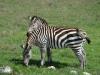 tanzania_ngorongoro_dsc08217