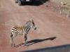 tanzania_ngorongoro_dsc_0015