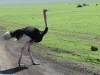 tanzania_ngorongoro_dsc_0106