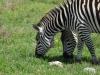 tanzania_ngorongoro_dsc_0345