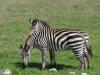 tanzania_ngorongoro_dsc_0347