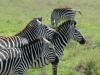 tanzania_ngorongoro_dsc_0353