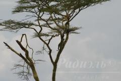 tanzania_serengeti_dsc_0041