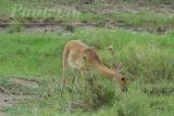 tanzania_serengeti_dsc_0062