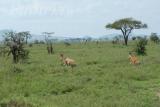 tanzania_serengeti_dsc_0126