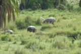 tanzania_serengeti_dsc_0163