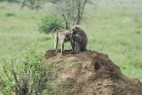 tanzania_serengeti_dsc_0181