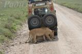 tanzania_serengeti_dsc_0497