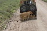 tanzania_serengeti_dsc_0502