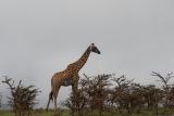 tanzania_serengeti_dsc_0615