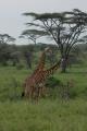 tanzania_serengeti_dsc_0870