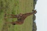 tanzania_serengeti_dsc_0946