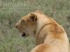 tanzania_serengeti_dsc_0512